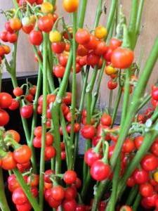 ハナナス 「紅白生花店」 (群馬県桐生市の花屋)のブログ